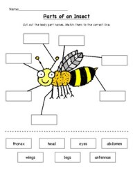 insect parts paste cut bug body insects preschool grade kindergarten diagram names bee label printable bees ant activities bugs 1st