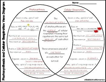 Photosynthesis And Cellular Respiration Venn Diagram