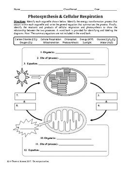 Photosynthesis And Cellular Respiration Worksheet By Athomic Science