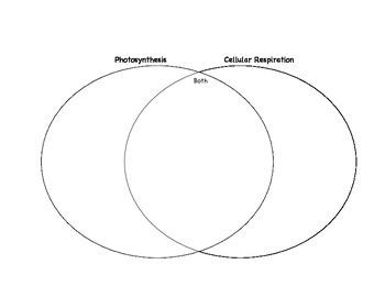 Photosynthesis vs. Cellular Respiration Venn Diagram