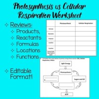 Photosynthesis vs. Cellular Respiration Worksheet by ...