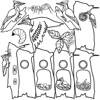 Pileated Woodpecker Life Cycle Clip Art Set by The Painted