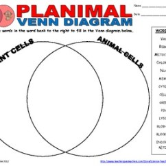 Plant Animal Cell Venn Diagram Heart Without Labels By Science Teacher Resources | Tpt