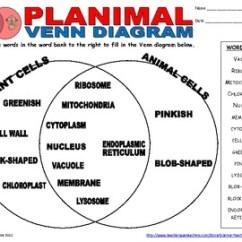 Blank Prokaryotic Cell Diagram 1994 S10 Headlight Wiring Plant Animal Venn By Science Teacher Resources | Tpt