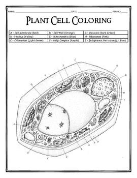 Nerve Cells Key Coloring Pages
