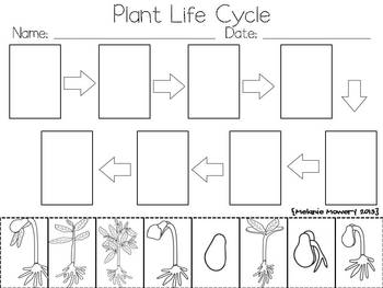 Plant Life Cycle {A Mini Science Learning Unit} by Melanie