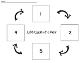 Plant Life Cycle Cut And Paste Worksheets & Teaching