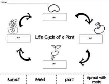 Plant Life Cycle Cut and Paste PACK by PreKinders in