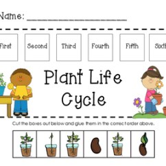 Sunflower Plant Life Cycle Diagram Autometer Tach Wiring Clip Art Clipart Vector Design In Order By Caroline Soesbee Teachers Mealworm