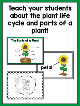 Rose Flower Life Cycle Diagram Plant Life Cycle And Parts Of A Plant Unit For Prek