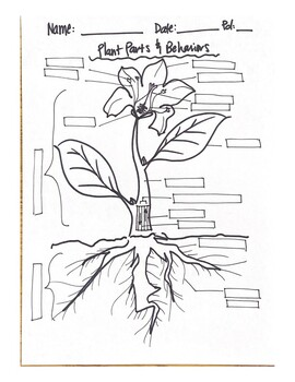Plant Parts and Tropisms Fill-in-the-Blank Worksheet by