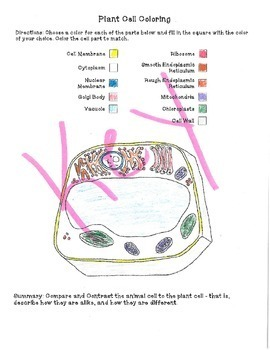animal cell coloring diagram labelled of a crab plant and activity by sandy s science tpt
