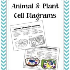 3d Animal Cell Coloring Diagram Baldor Single Phase Motor Wiring With Capacitor Cells Teaching Resources Teachers Pay Plant And Page