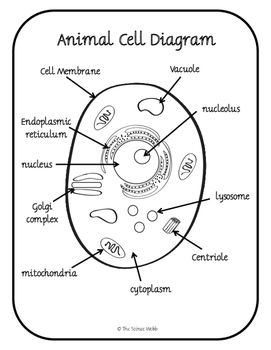 Plant and Animal Cell Organelles Structure and Function by