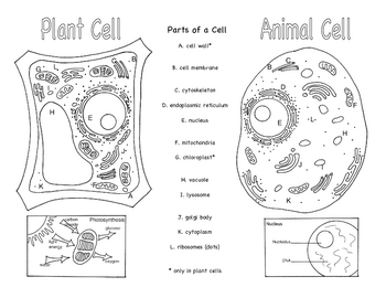 Plant and Animal Cells Brochure Ce-1 by Bluebird Teaching