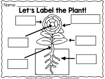 Plants (PowerPoint, Science Lessons, Printables) by A Dab