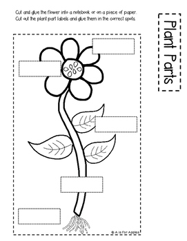 Plants: Differentiated Interactive Notebook Activities by