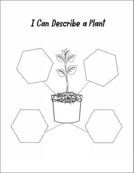 Plants Life Cycle Fun Activities For Grade 1-3 by Mirin