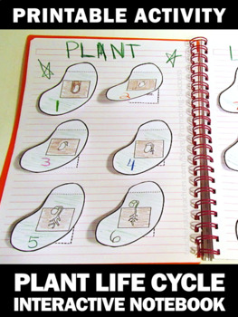 Plant Life Cycle Activity, Plants Interactive Notebook by