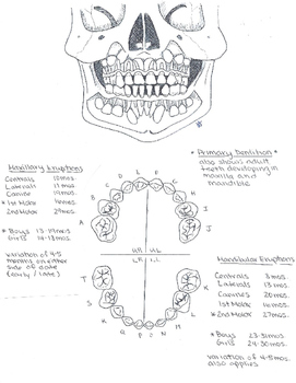 Primary and Permanent Dentition Study Guide by The Helper