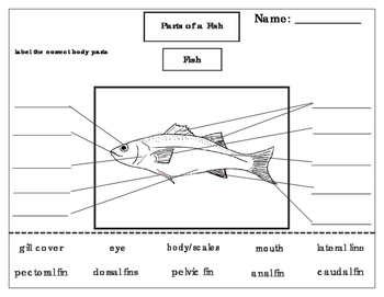 Printables: Label the parts of a Fish by Green Tree