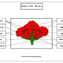 Parts Of A Flower Diagram Wiring For Immersion Heater Thermostat Printables: Label The Flower/ Poppy | Tpt