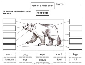 Printables: Label the Parts of a Polar Bear by Green Tree