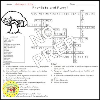 Science Protists Worksheet. Science. Best Free Printable