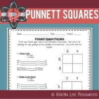 Punnett Squares Practice Worksheet by Kristin Lee ...