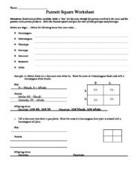 Punnett Square worksheet by Aussie Science Teacher | TpT