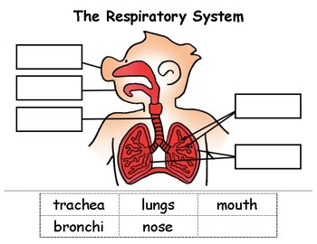 respiratory system blank diagram to label car wiring diagrams uk cut paste by nikki squillante tpt