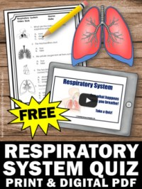 FREE Respiratory System Test, Human Body Systems Grade 5 ...