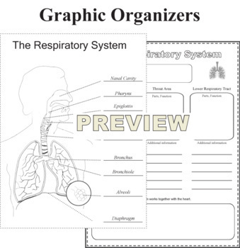 Respiratory System Model NGSS MS-LS1-3 by Dr Dave's