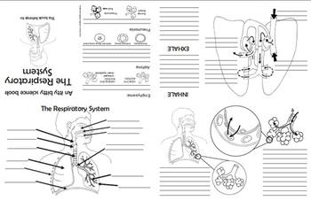 Respiratory system Foldable (Science, Anatomy) by ArtsyCat