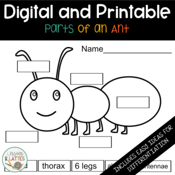 Science- Parts of an Insect Worksheet by Lessons and