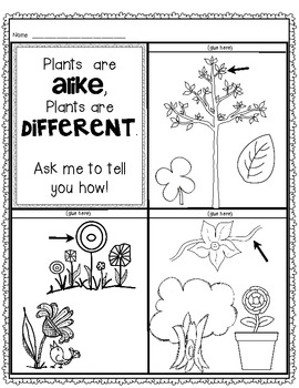 Science: Plants and Seeds {Let's Label It!} Cut and Paste