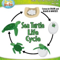 Sea Turtle Life Cycle Diagram Ford Charging System Wiring Clipart {zip-a-dee-doo-dah Designs} | Tpt