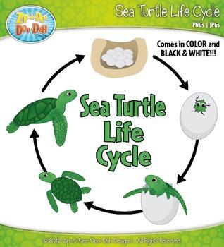 Sea Turtle Life Cycle Clipart Zip A Dee Doo Dah Designs Tpt