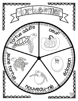 Sea Turtle Life Cycle Craftivity ~ French ~ La tortue de