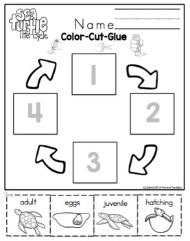 Sea Turtle Life Cycle Math and Literature by Preschool
