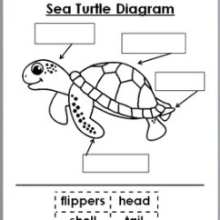 Diagram Turtle S Head Yamaha Raptor 700 Headlight Wiring Sea Turtles And Seashore Birds Science Literacy Crafts Unit