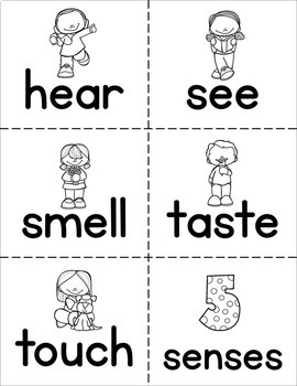 Senses and Body Parts Word Wall Flash Cards by The Super