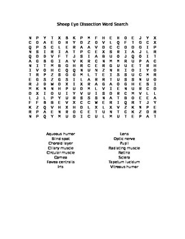 Sheep or Cow Eye Dissection Word Search by Everything