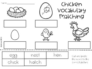 Life Cycle of a Chick Unit {4 stages} by Michelle Griffo