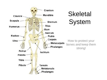skeleton diagram to label the bones transistor contactor wiring with timer skeletal system (bones) powerpoint by mandy caruso | tpt