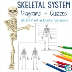 Kids Skeletal System Diagram 95 Mustang Wiring Diagrams Study Label Quiz Color By Science Island