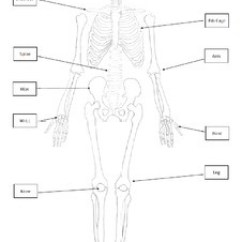 Skeleton Diagram With Labels Wiring Toggle Switch Skeletal System Poster (cut-and-paste Bones Of The Skeleton) By Alexis Forgit