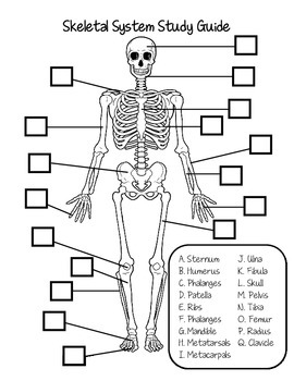Skeletal System Study Guide by Fantastic in 4th | TpT