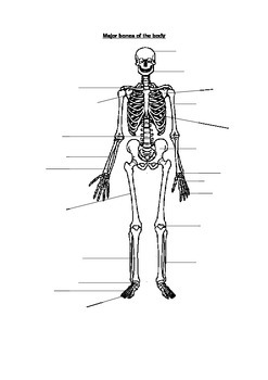 Skeleton Diagram Blank