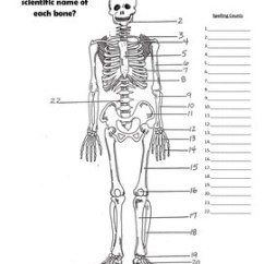 Skeletal And Muscular System Diagram How To Draw Basic Wiring Diagrams Bundle By Merry In The Middle Tpt